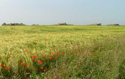 """Where blood is shed, a poppy grows..."" We saw a lot of poppies along the wheat fields of France."