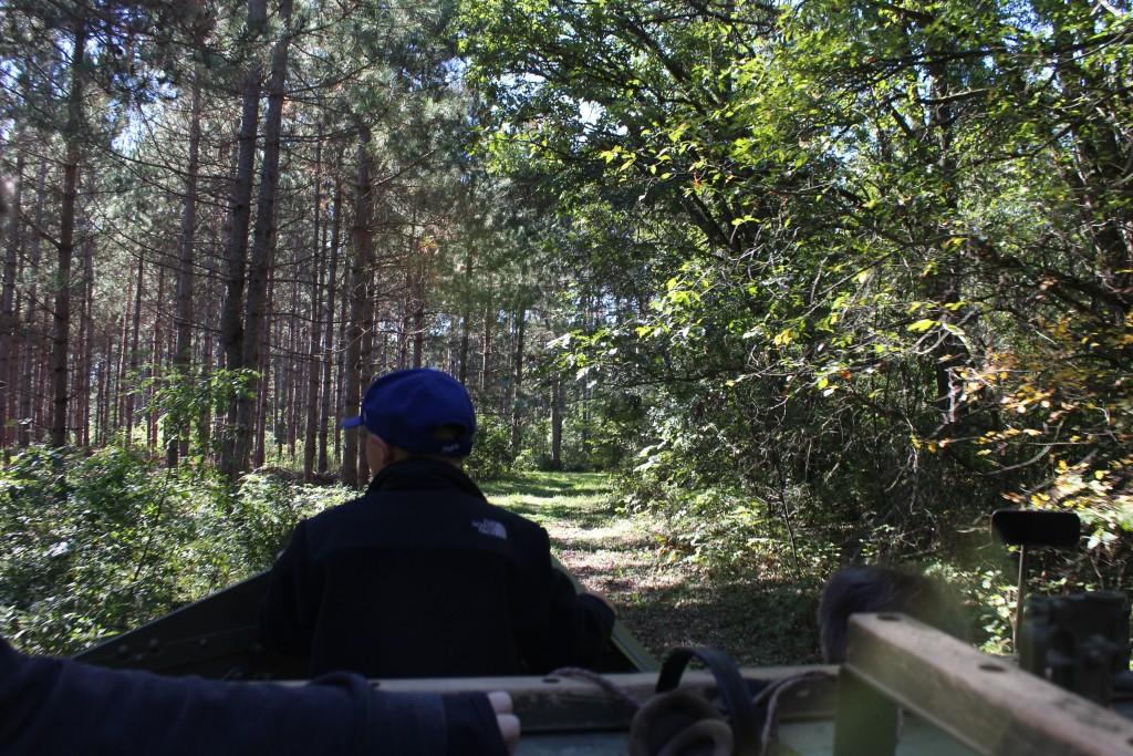 Pine-Patrol-2015-07