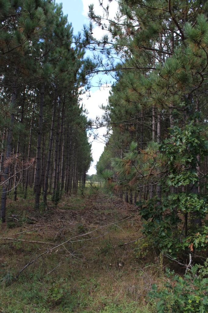 Pine-Patrol-2015-29